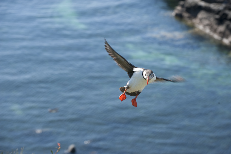 Puffins and unusual weather…